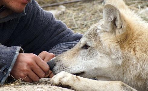 S. Feng (Totem vlka)