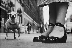 New York Dog and Sandals, 1946